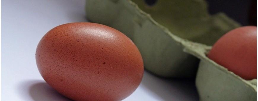 Fresh & Egg products